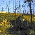 Habitat enclosures for the cats