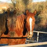 The Horse at the ranch