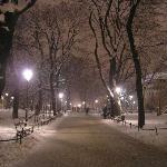 Atmospheric 'Planty' by night