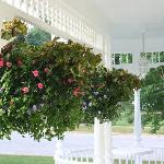 A view of the porch and the wonderful flowers