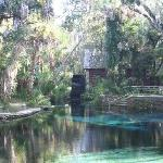 Juniper Springs RA- blue hole / swimming area