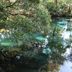 Juniper Springs RA - blue hole