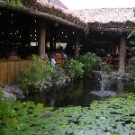 fish pond outside main restaurant