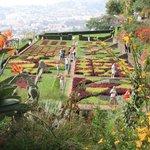 Botanic view