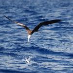 Bird going for our Baitfish on our Tripadvisor Cruise November 14th 2007