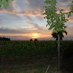 Sunset over Abeja Inn vineyard