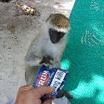 A naughty monkey