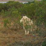White lion at the Pumba Game Reserve