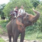 Excursion à dos d'éléphant