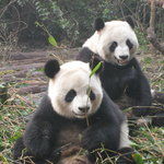 Hetaoping Research and Conservation Center for the Giant Panda