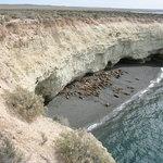 Lobos de mar, descansando, Punta Loma, marzo 2004
