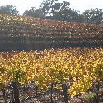Opolo vineyard