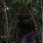 Path to Treehouse