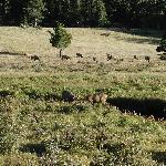 Estes Park Elk Meadow