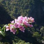 Flora. overlooking canyon @ Casa Bella Rita