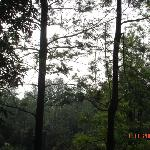 silver oaks at prospect