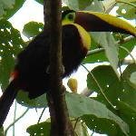 Spotted a Toucan!