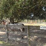 Mill Creek Farm's blind horse paddock