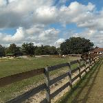 Mill Creek Farm's fenced meadow for retired horses