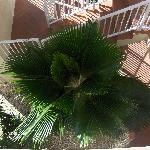 Looking down into a palm tree from the 3rd floor
