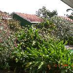 Plush greenery surroundings