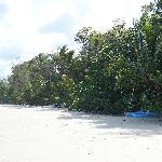 Nearby Cow Bay beach