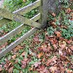 Autumn at Sawrey