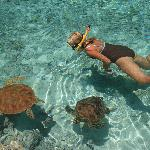 Swimming with turtles at the hotel lagoon (17445746)