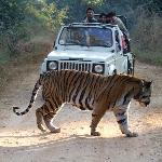The tiger we saw!