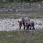 Mother and cub with salmon