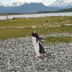 On Isla Pinguinas