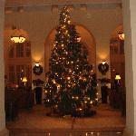 Reception area with xmas tree