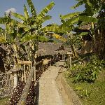 Weg zwischen Bananenbäumen zu den Häusern