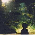 One of the aquariums.