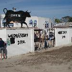Bullfights at La Paloma