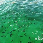 Fischschwarm bei Schnorchelstopp