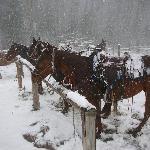 Foto de Dome Mountain Ranch