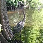 Photo de Swan Lake Iris Gardens