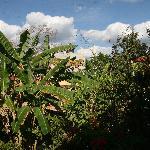 Garden in front of the Casa Hamaca