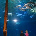 fish at the ocean center