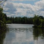Dinton Pastures - Black Swan Lake