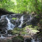 Waterfall on the property