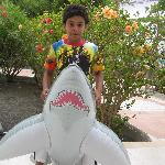 Beware the Shark Hunter