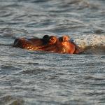 Sundowners with Hippos