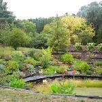 Peaceful watergarden to enjoy the antics of the birds