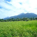 Gunung Gading as the backdrop of this peaceful village