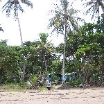 View of Beach Shack from beach