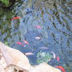Fish swimming in the courtyard pond