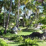 Il giardino dietro del Sai Thong Resort di Koh Tao - The garden