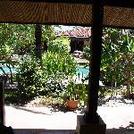 Bula Bula gardens/poolside